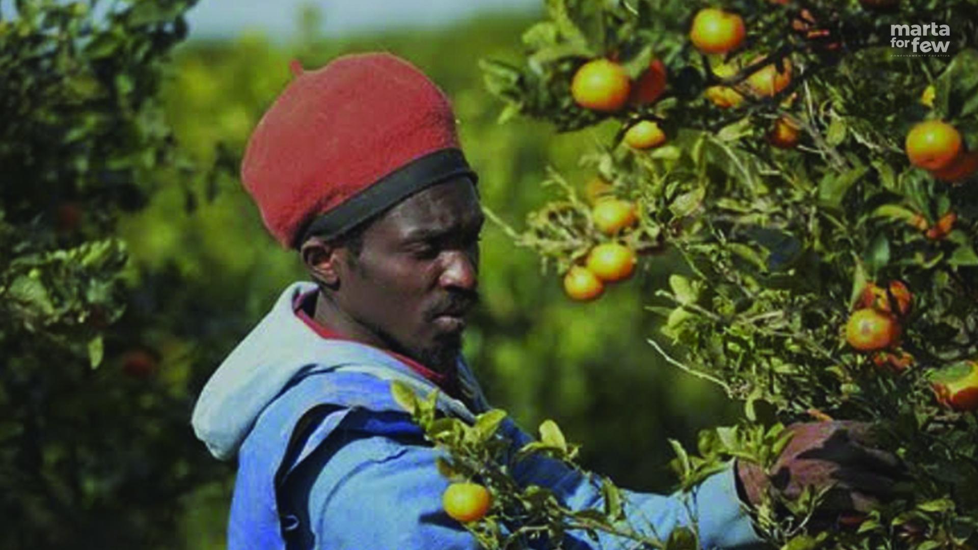 UE AGRICOLTURA crisi difficoltà covid19